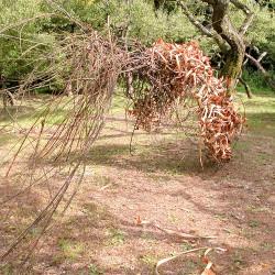 jardin del museo nacional isla de Kyushu japon.