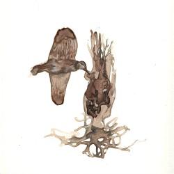 2008 dibujo ilustraciones 24 Colibri